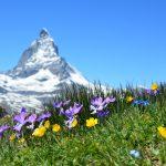 自殺ほう助で有名なスイスは緩和ケア後進国?
